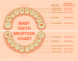 Baby Teeth Chart Infographic