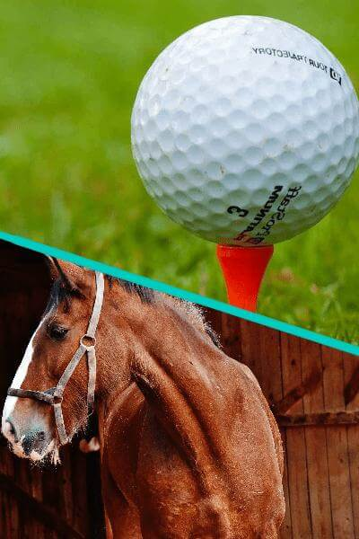 Golfing and horseback riding in Phoenix Metro Area
